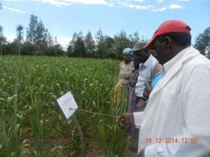 Ext staff trains farmers on sorghum production during CA fieldday in Matanya, Laikipia, Dec 2014 DSCN7893